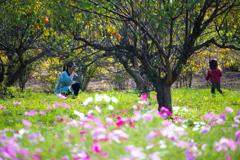 コスモス畑とカメラママ #3