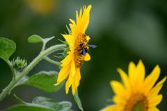 花の蜜 #2