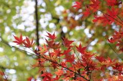 小金井公園の紅葉-10