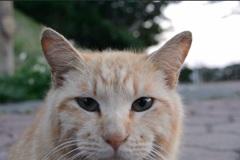 猫 沖縄 アップ
