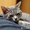 猫の日 2