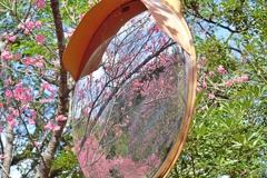 八重岳の桜 2 2021