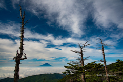 枯れ木と富士