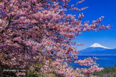 桜花の囲まれて