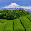 緑薫る季節