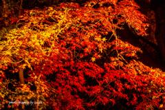 河口湖紅葉ライトアップ1