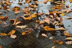 落ち葉の彩り