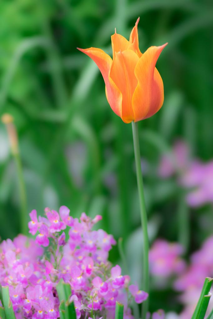 横浜公園の花
