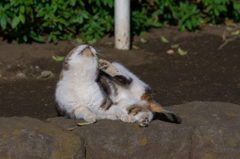 平塚総合公園の猫