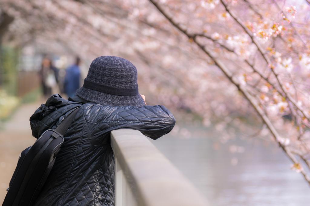 お江戸桜まつり