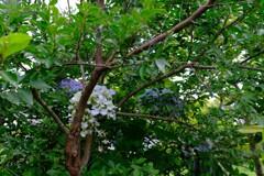 青い花飾り