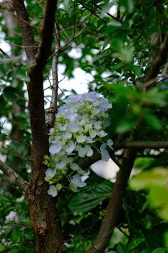 青い花飾り~2