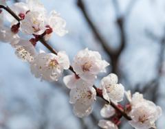桜に見えんかな〜^^;