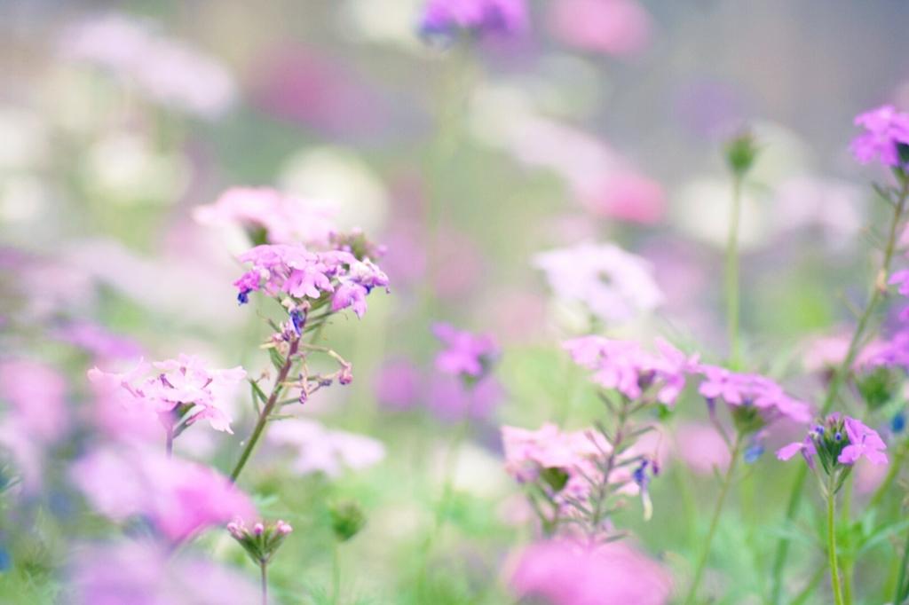 花達の囁き