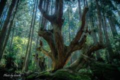 手のひらを太陽に -神の宿る森ー