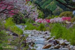 川、彩る -その弐-
