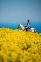 白馬に乗る少女