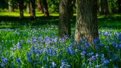 青い花の咲く場所