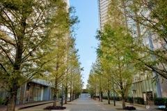 都会の並木路