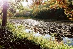 朝の三池公園