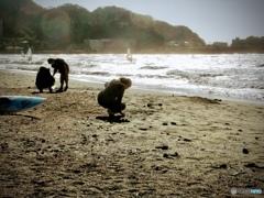 貝殻を集めて