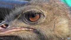 ダチョウの目