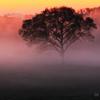 朝靄のシンフォニー