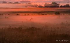 朝靄燃える湿原
