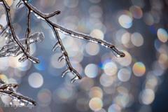 雨氷ファンタジー