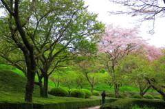 静岡 岩本山公園