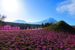 富士山と芝桜-7