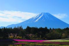 富士山と芝桜-6