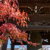 鎌倉 本覚寺-1