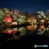 白鳥庭園 名古屋-5