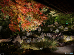 晩秋の夜 京都-6