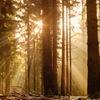溢れ出す朝の光
