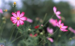 武蔵野線沿線の花。