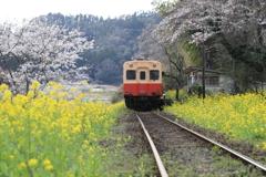秘境駅の春。