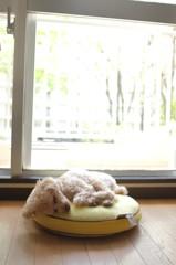窓辺の留守番犬。