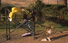 漕艇場の猫。