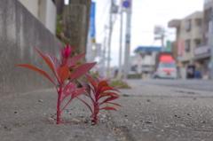 きれいな葉っぱ…。