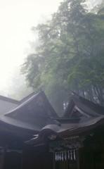 静寂と霧の朝。