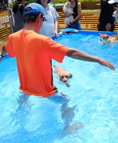 すいすい泳ぐ。