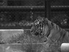 モノクロ動物園①