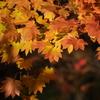 自然の秋を収める
