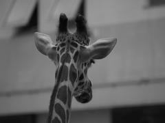 モノクロ動物園⑤