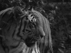 モノクロ動物園②