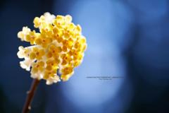 花言葉は永遠の愛