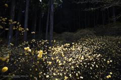 深き森に輝く