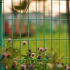 囚われた花